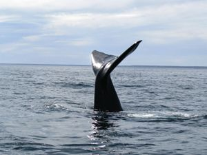 ballenas-jorobadas-musica