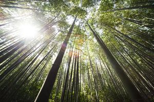 congreso-bosques