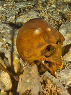 cráneo-(Science)