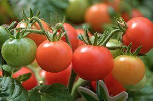 piel-tomates-plasticos